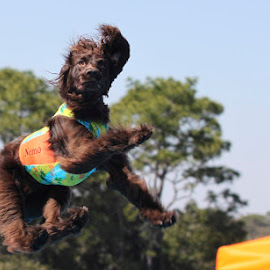 Nemo by Rhetta Sweeney - Animals - Dogs Running ( #dogs, fly, dock dog )