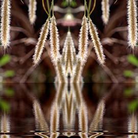 Espigas by Alberto Nadgar R. - Digital Art Abstract ( espiga, abstracto, reflex )