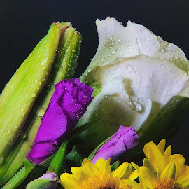 Rose Arrangement by Dave Walters - Flowers Flower Arangements ( mystic, rose, macro, nature, colors, flowers, lumix fz2500 )