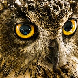 by Ernesto Sanchez - Animals Birds