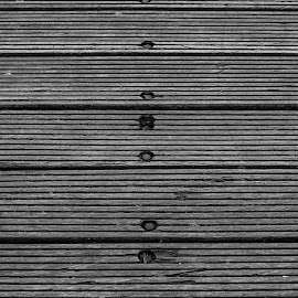 Nails on a boat by Nistorescu Alexandru - Abstract Patterns ( #wood, #nails, #old, #bw, #rust, #boat )