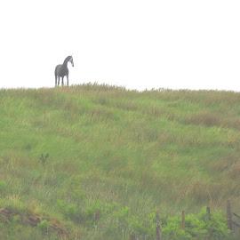 Guard Horse by Jennifer  Loper  - Artistic Objects Still Life ( horse, hill, manmade, oban, scotland )