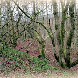 Trees at Burfa Hill Fort by Caroline Beaumont - Nature Up Close Trees & Bushes ( autumn leaves, moos, trees, landscape, lichen )