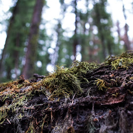 Moss Bokeh by Daniel Solce - Nature Up Close Other plants ( tree, nature, outdoors, moss, forest, bokeh )