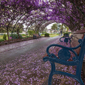 Wisteria Arch by Carole Pallier Cazzazsnapz - City,  Street & Park  City Parks ( structure, benches, purple, park, wisteria, seats, archway, garden, blossoms, flower, tunnel )