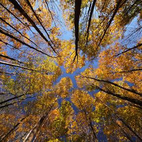 October Sky by Mircea Costina - Landscapes Forests