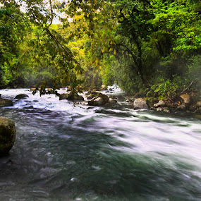 River and trees by Cristobal Garciaferro Rubio - Nature Up Close Water ( water, trees, leaves, rocks, river )