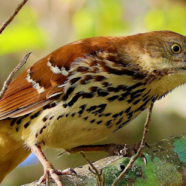 Bird close up! by Paul S. DeGarmo - Animals Birds ( bird, tree, branch, view, close,  )