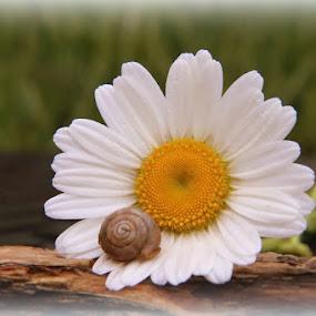 by Crystal  Wilson - Flowers Single Flower
