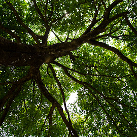 Branches by Atin Saha - Abstract Patterns ( abstract, nature, tree, green, nikon, d5100, branches )