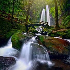 by Hanan Maulana - Landscapes Forests