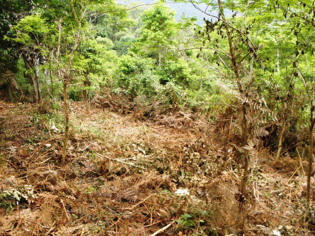 Terreno Residencial à venda em Teresópolis, Jardim Salaco