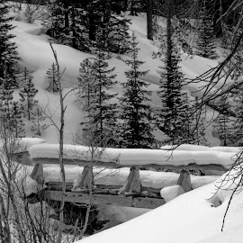 The Bridge by Marko Ginsberg - Black & White Landscapes ( continental divide trail, winter, snow, trees, bridge,  )