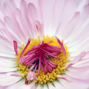 Spring time by Sergey Sokolov - Flowers Single Flower ( flourishing, flowering, park, root, grass, weed, bloom, inflorescence, leaf, blossom, herb, bark, bundle, flowers, blow, garden, flower,  )