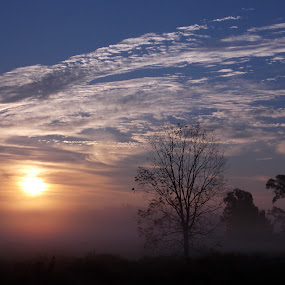 Dawn by Jeannie Love - Landscapes Sunsets & Sunrises ( field, sky, fog, trees, sunrise )