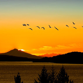 Crack of Dawn, Mt. Baker, WA.  by Campbell McCubbin - Landscapes Sunsets & Sunrises ( mountain, dawn, canada goose, mt. baker, sunrise, geese, flock )