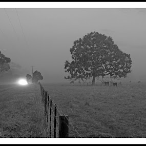 Foggy Morning by Sassine El Nabbout - Landscapes Prairies, Meadows & Fields ( yuroke, fog, victoria, morning,  )
