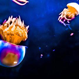 Underwater Jellyfish  by Stephen Schwartzengraber - Animals Fish ( cool, color, colorful, underwater, jellyfish )