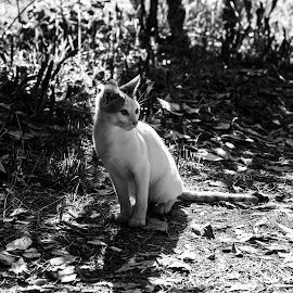 Cat by Ekin Tozlu - Animals - Cats Portraits ( cat, nature, pet, forest, animal,  )