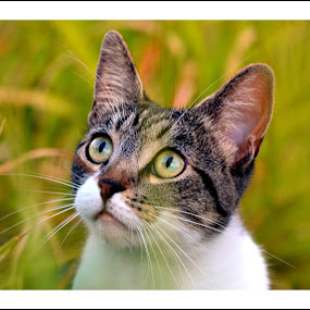 I can see something  by Rima Biswas - Animals - Cats Portraits ( cat, nature, whiskers, close up, eyes, animal )