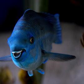 Dory by Shawn Thomas - Animals Fish