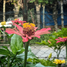 Flower by HeRy Zal - Instagram & Mobile Android