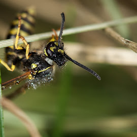 Just hanging on! by Lidy Kerr - Animals Insects & Spiders