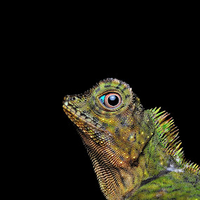 by Ramlan Abdul Jalil - Animals Reptiles