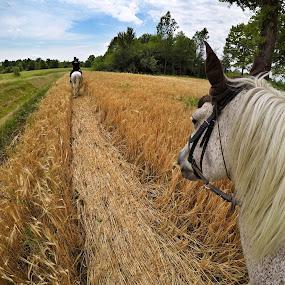 by Ivana Tilosanec - Landscapes Prairies, Meadows & Fields ( field, animals, nature, horses, riding, natureza, horse, landscape )