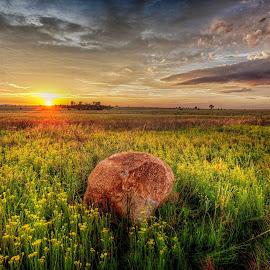 Lonley Sunrise by Jolene Groenewald - Landscapes Prairies, Meadows & Fields ( field flower, rock, yellow, sunrise, landscape )