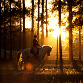 by Steven C. Bloom - Animals Horses ( eventing, horse )
