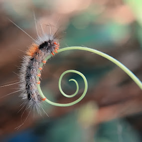 Caterpillar by Irfan Hikmawan - Animals Other