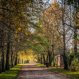 Walking path by Mario Horvat - City,  Street & Park  City Parks ( leafs, park, autumn, outdoor, path, ljubljana, trees )