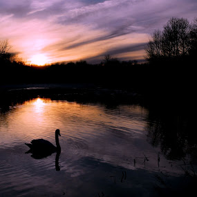 Last Light by Steve Cooper - Landscapes Waterscapes ( clouds, ripples, sundown, trees, swan )