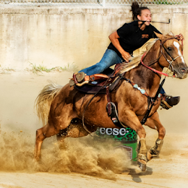 Headed for the finish line by Joe Saladino - Sports & Fitness Rodeo/Bull Riding ( rider, barrel racer, barrel race, horse, competition )