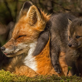 Mother and Kit by Steve Dunsford - Animals Other Mammals