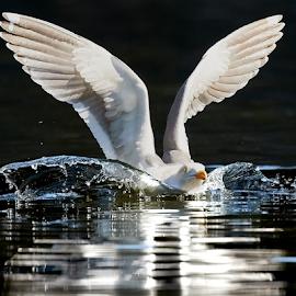 0 Bird 99761~ by Raphael RaCcoon - Animals Birds