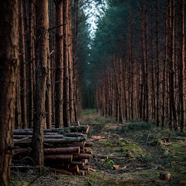 Lonely Wood by David Crawford - Landscapes Forests ( canon, roggel, 70d, twilight, landscape, dusk, hiking, netherlands, forrest, nature, sunset, trail, holland, limburg, trees, dutch, lonely,  )