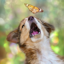 The catch by Runa Nightsongwoods - Animals - Dogs Playing ( butterfly, dogs, catch, dog portrait, fun, blur, cute, young, bokeh, puppies, summer, puppy, dog playing, dog, blurry, animal )