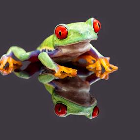 On reflection by Angi Wallace - Animals Amphibians