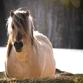 Sophie by Tammy Drombolis - Animals Horses (  )