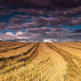 after the harvest 2 by Bob Applegate - Landscapes Prairies, Meadows & Fields ( clouds, field, wheat, summer, harvest )
