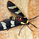 Wasp-mimic moth