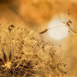 The heat by Ad Spruijt - Nature Up Close Other plants