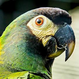 Well Hello by Ken Nicol - Animals Birds (  )