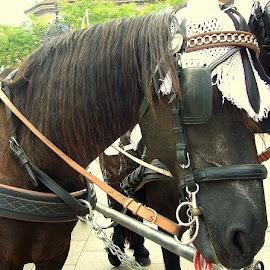 by Jette Helbig Hansen - Animals Horses