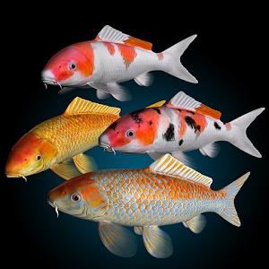 App koi fish live wallpaper apk for windows phone for Koi fish games