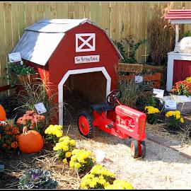 Small farm by Maritza Féliz - Nature Up Close Gardens & Produce ( farm, fall colors, autumn, farmland, tractor )