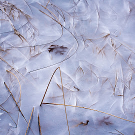 Nature's Abstract II by Jebark Fineartphotography - Abstract Patterns ( grasses, abstract, winter, nature, ice, snow, natural )