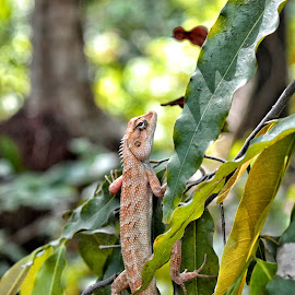 Guard of my Garden  by Soumyabrata Roy - Animals Amphibians